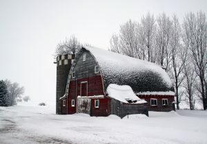 Tree-in-Silo-Barn-.jpg