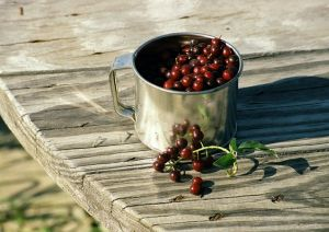 Chokecherry-Cup.jpg