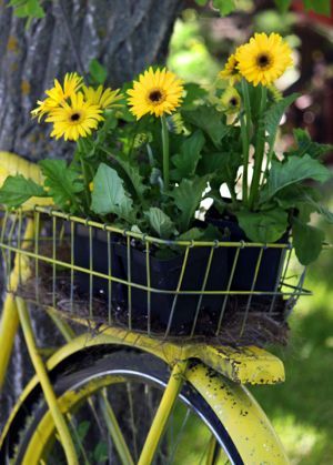 Yellow-bike-flowers-web.jpg