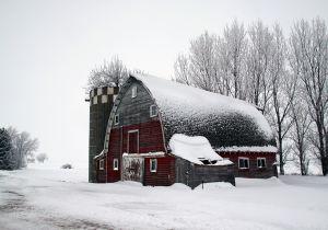 Tree-in-Silo-Barn-.jpg
