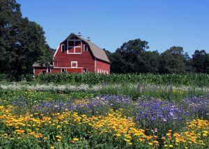 swanson-barn-walhalla-web.jpg