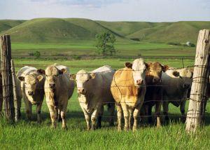 Prairie-Folk.jpg